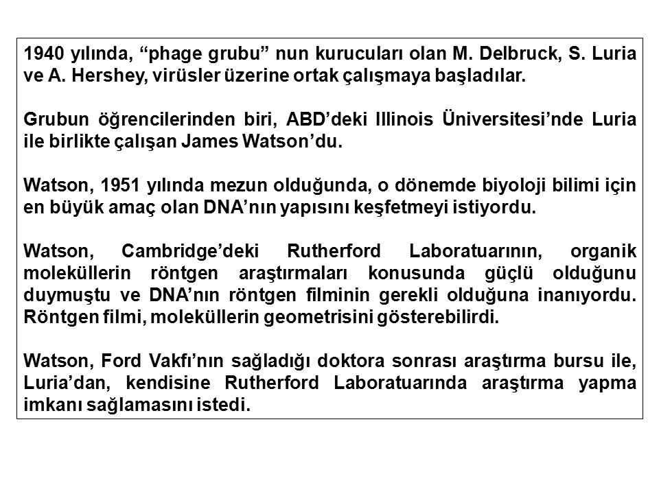 """1940 yılında, """"phage grubu"""" nun kurucuları olan M. Delbruck, S. Luria ve A. Hershey, virüsler üzerine ortak çalışmaya başladılar. Grubun öğrencilerind"""