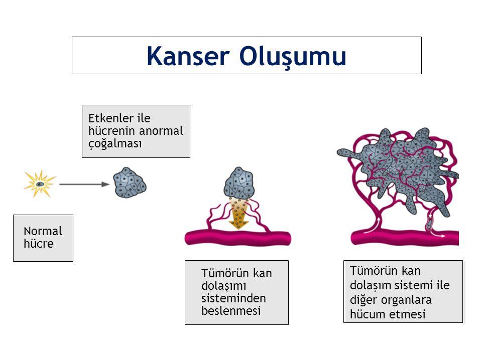 Tümörün kan dolaşım sistemi ile diğer organlara hücum etmesi Kanser Oluşumu Etkenler ile hücrenin anormal çoğalması Normal hücre Tümörün kan dolaşımı