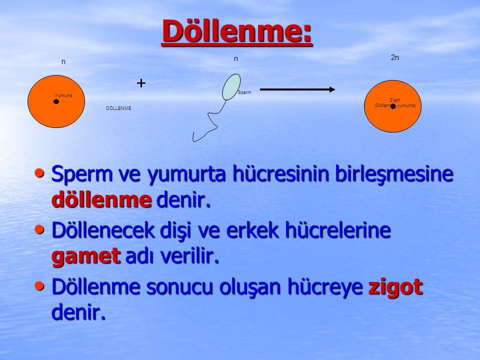 Döllenme: Sperm ve yumurta hücresinin birleşmesine döllenme denir. Sperm ve yumurta hücresinin birleşmesine döllenme denir. Döllenecek dişi ve erkek h