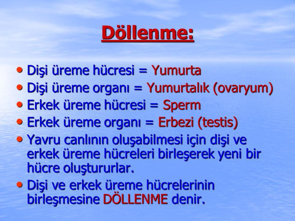 Döllenme: Dişi üreme hücresi = Yumurta Dişi üreme hücresi = Yumurta Dişi üreme organı = Yumurtalık (ovaryum) Dişi üreme organı = Yumurtalık (ovaryum) Erkek üreme hücresi = Sperm Erkek üreme hücresi = Sperm Erkek üreme organı = Erbezi (testis) Erkek üreme organı = Erbezi (testis) Yavru canlının oluşabilmesi için dişi ve erkek üreme hücreleri birleşerek yeni bir hücre oluştururlar.