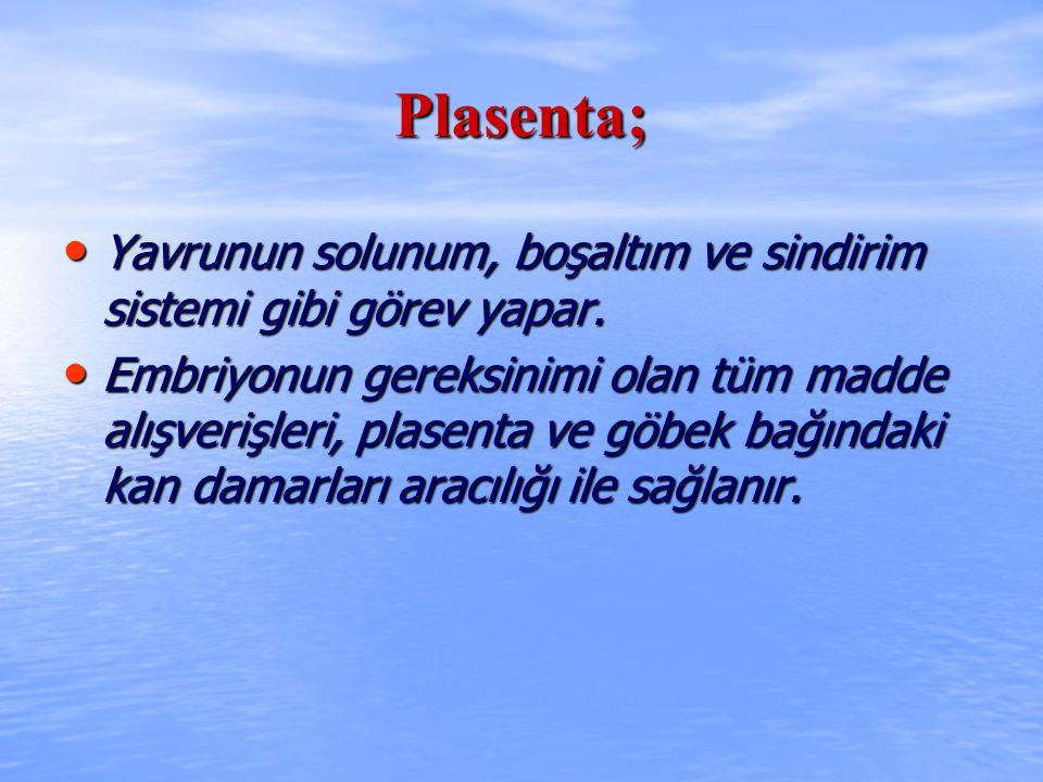 Plasenta; Yavrunun solunum, boşaltım ve sindirim sistemi gibi görev yapar. Yavrunun solunum, boşaltım ve sindirim sistemi gibi görev yapar. Embriyonun