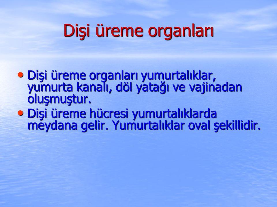 Dişi üreme organları Dişi üreme organları yumurtalıklar, yumurta kanalı, döl yatağı ve vajinadan oluşmuştur. Dişi üreme organları yumurtalıklar, yumur
