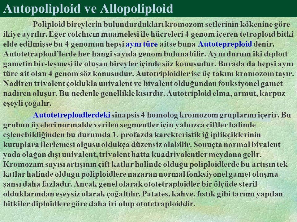 Autopoliploid ve Allopoliploid Poliploid bireylerin bulundurdukları kromozom setlerinin kökenine göre ikiye ayrılır. Eğer colchıcın muamelesi ile hücr