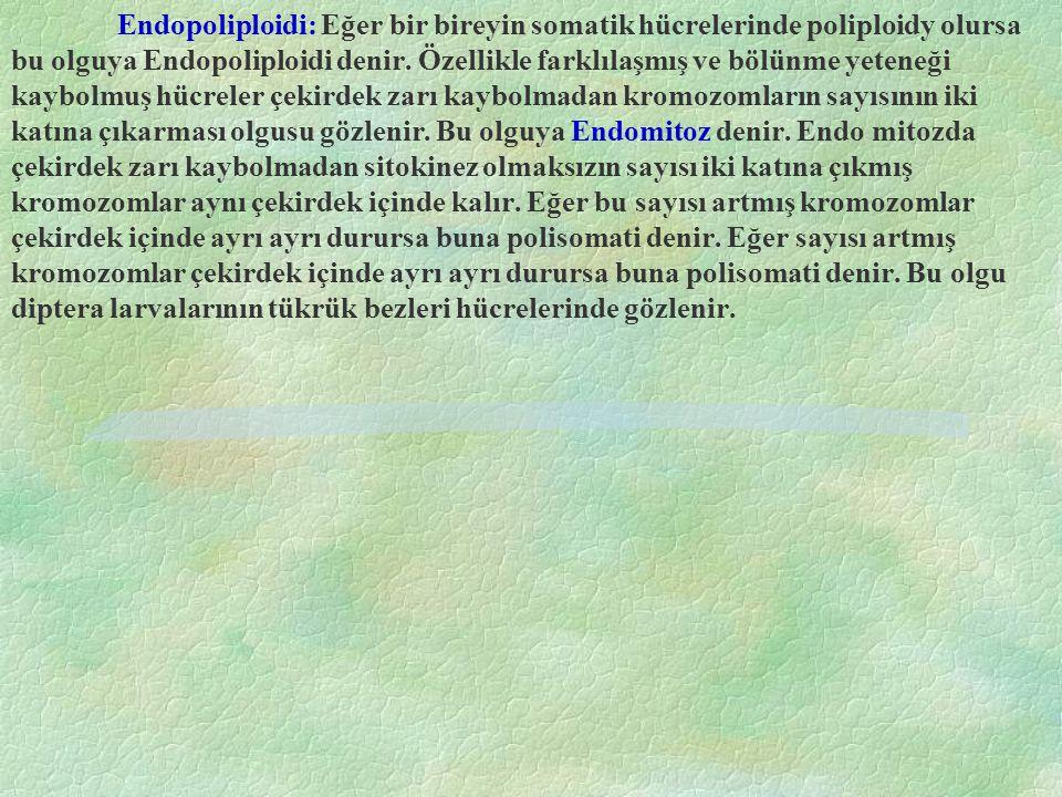Endopoliploidi: Eğer bir bireyin somatik hücrelerinde poliploidy olursa bu olguya Endopoliploidi denir. Özellikle farklılaşmış ve bölünme yeteneği kay