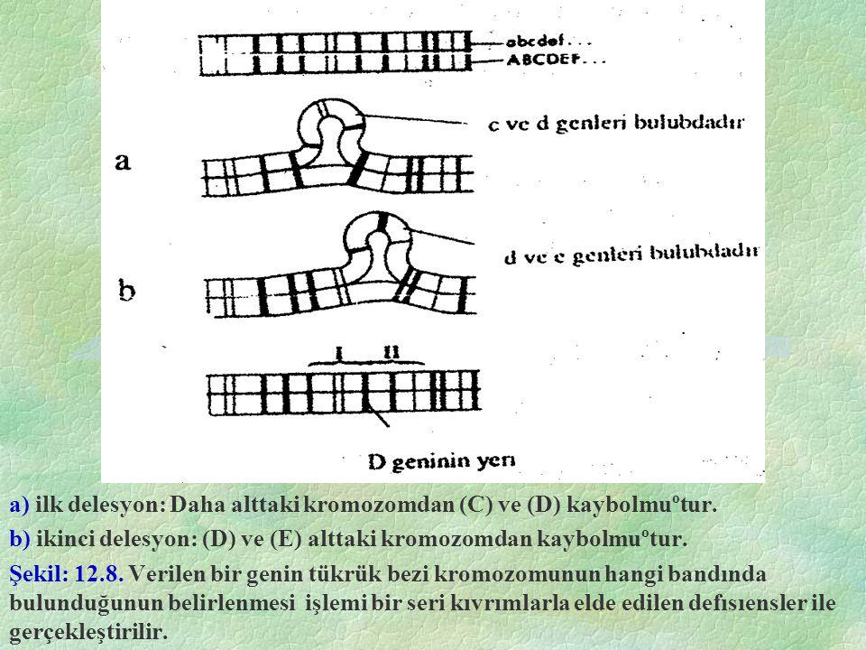 a) ilk delesyon: Daha alttaki kromozomdan (C) ve (D) kaybolmuºtur. b) ikinci delesyon: (D) ve (E) alttaki kromozomdan kaybolmuºtur. Şekil: 12.8. Veril