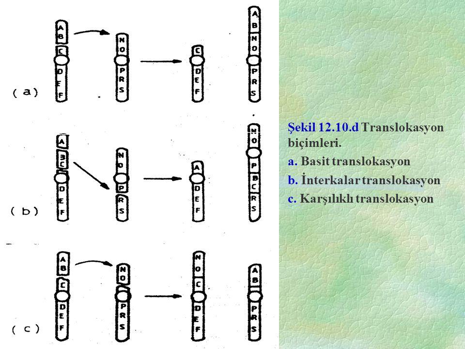 Şekil 12.10.d Translokasyon biçimleri. a. Basit translokasyon b. İnterkalar translokasyon c. Karşılıklı translokasyon