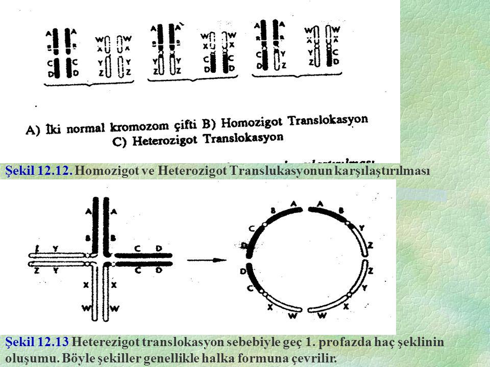 Şekil 12.12. Homozigot ve Heterozigot Translukasyonun karşılaştırılması Şekil 12.13 Heterezigot translokasyon sebebiyle geç 1. profazda haç şeklinin o