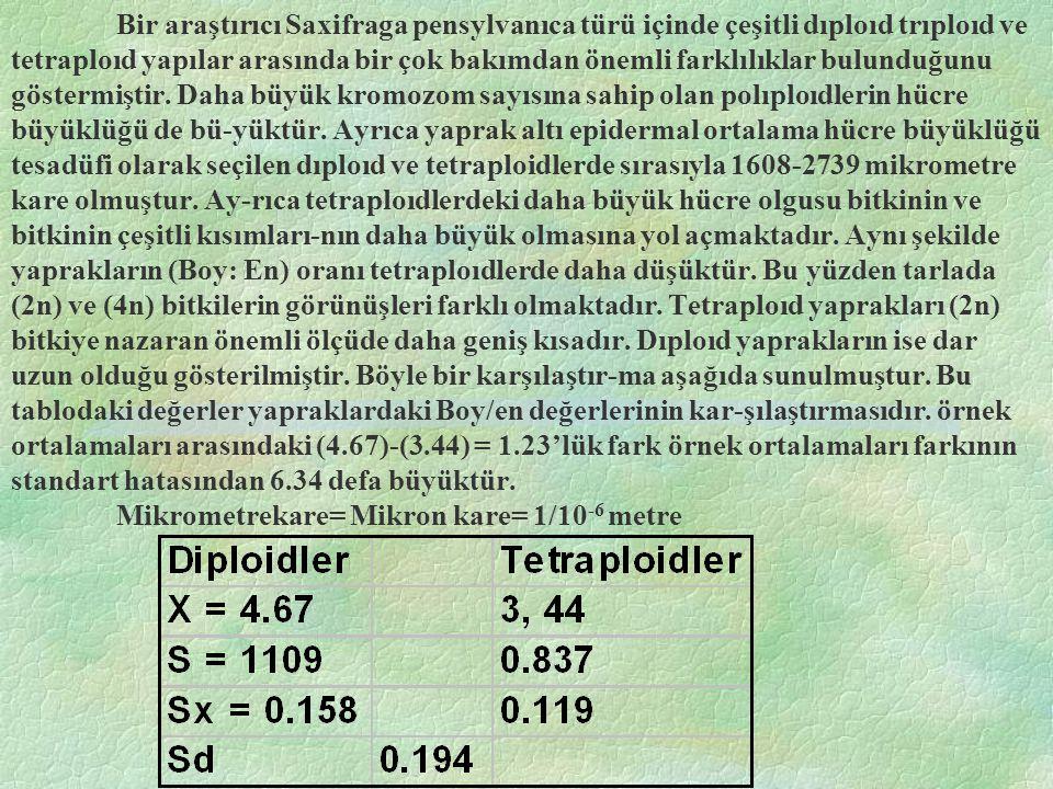 Neticede 17 mor: 1 Beyaz oranı oluşturur.