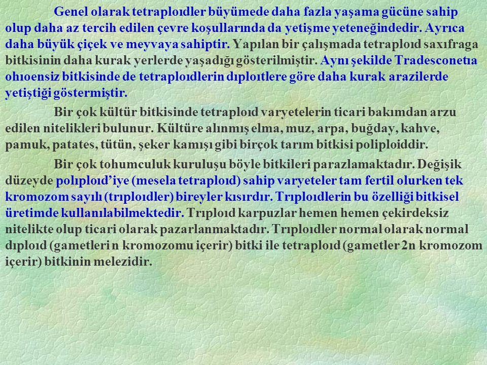 Tür Melezleri Rus sitolojisti Karpeçanko Crucıfera familyasından Raphanus (kırmızı turp) ile Brassıca (Lahana) cinslerine ait iki bitkiyi melezleyerek yeni bir cins oluşturmuştur.