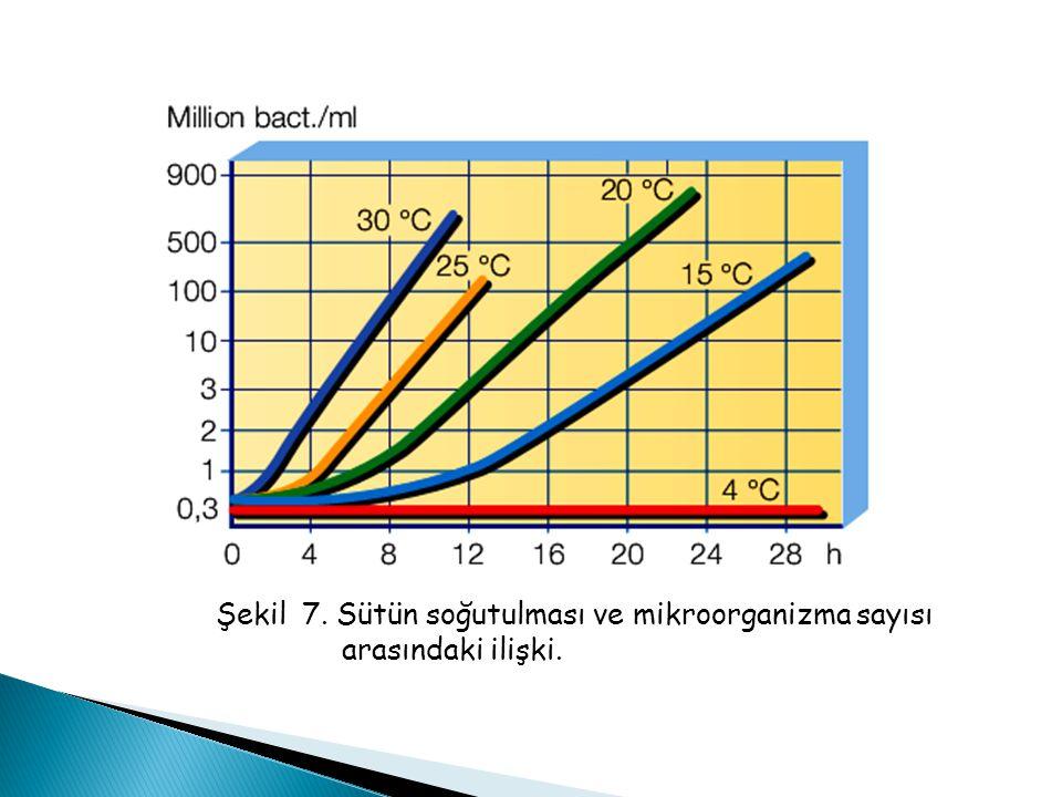 Şekil 7. Sütün soğutulması ve mikroorganizma sayısı arasındaki ilişki.