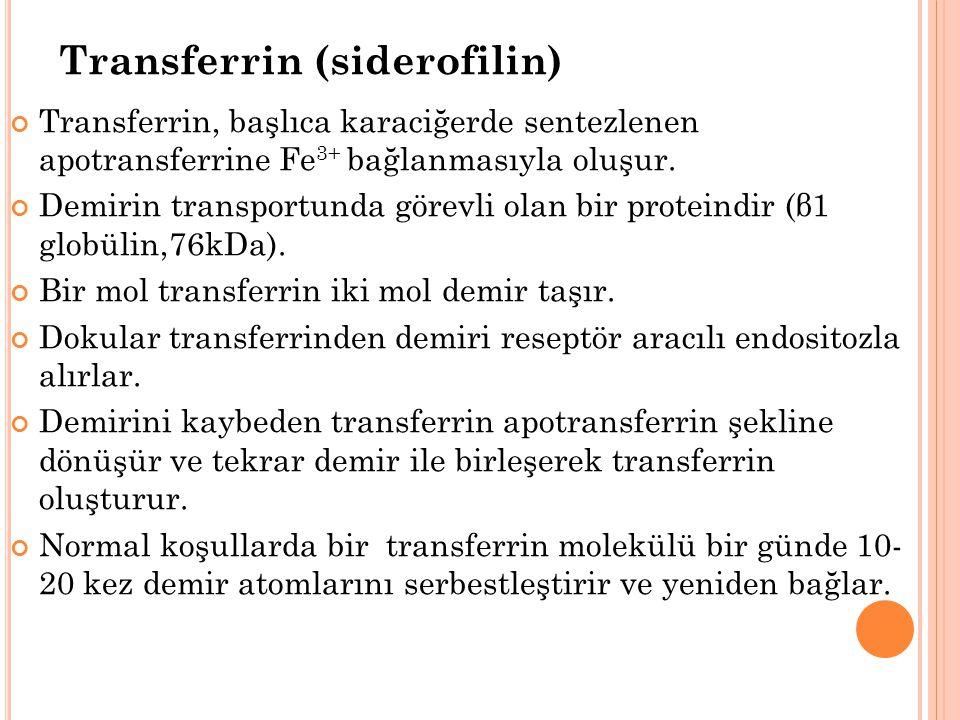 Transferrin (siderofilin) Transferrin, başlıca karaciğerde sentezlenen apotransferrine Fe 3+ bağlanmasıyla oluşur.