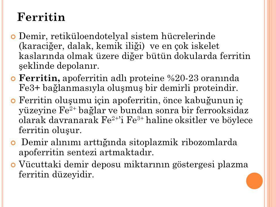 Ferritin Demir, retiküloendotelyal sistem hücrelerinde (karaciğer, dalak, kemik iliği) ve en çok iskelet kaslarında olmak üzere diğer bütün dokularda ferritin şeklinde depolanır.