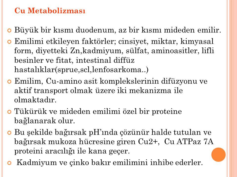 Cu Metabolizması Büyük bir kısmı duodenum, az bir kısmı mideden emilir.