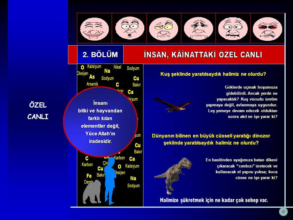 ÖZEL CANLI 2. BÖLÜM İnsanı bitki ve hayvandan farklı kılan elementler değil, Yüce Allah'ın iradesidir. Dünyanın bilinen en büyük cüsseli yaratığı dino
