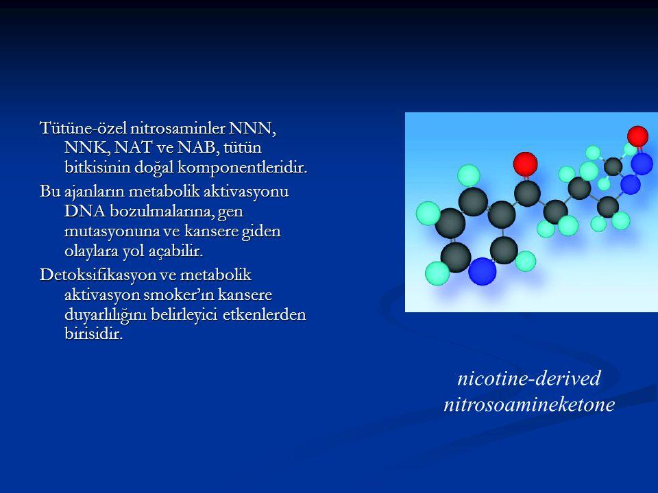 Tütüne-özel nitrosaminler NNN, NNK, NAT ve NAB, tütün bitkisinin doğal komponentleridir. Bu ajanların metabolik aktivasyonu DNA bozulmalarına, gen mut