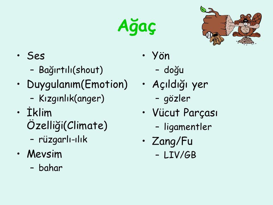 Ağaç Ses –Bağırtılı(shout) Duygulanım(Emotion) –Kızgınlık(anger) İklim Özelliği(Climate) –rüzgarlı-ılık Mevsim –bahar Yön –doğu Açıldığı yer –gözler Vücut Parçası –ligamentler Zang/Fu –LIV/GB