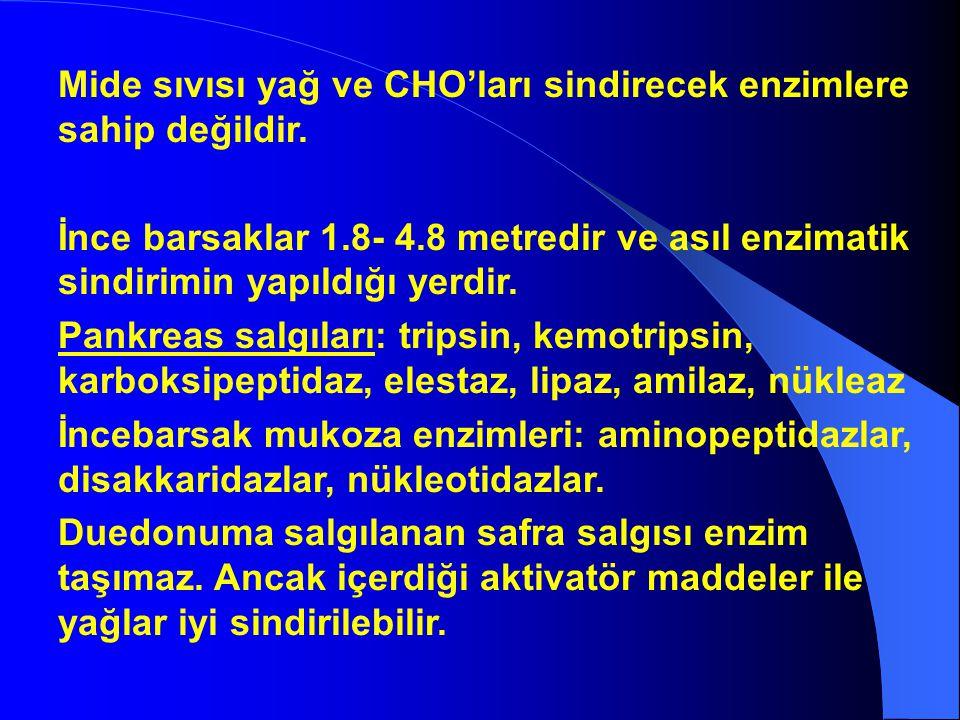 Mide sıvısı yağ ve CHO'ları sindirecek enzimlere sahip değildir. İnce barsaklar 1.8- 4.8 metredir ve asıl enzimatik sindirimin yapıldığı yerdir. Pankr