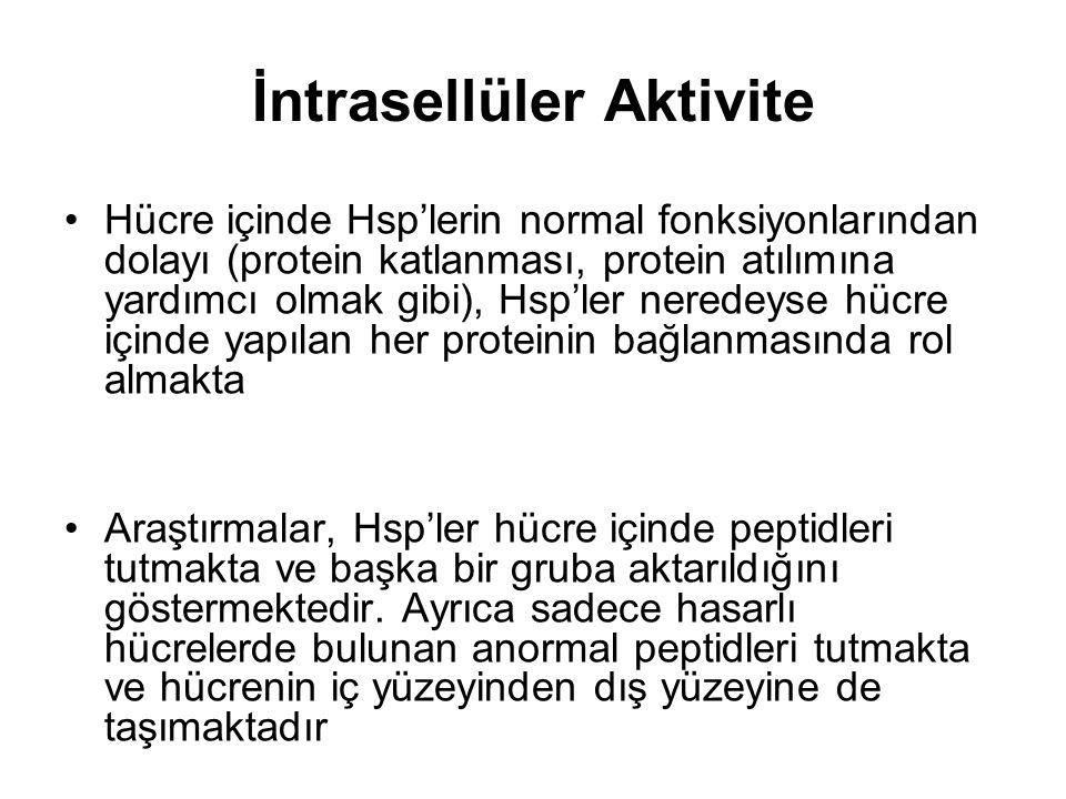 Hücre içinde Hsp'lerin normal fonksiyonlarından dolayı (protein katlanması, protein atılımına yardımcı olmak gibi), Hsp'ler neredeyse hücre içinde yap