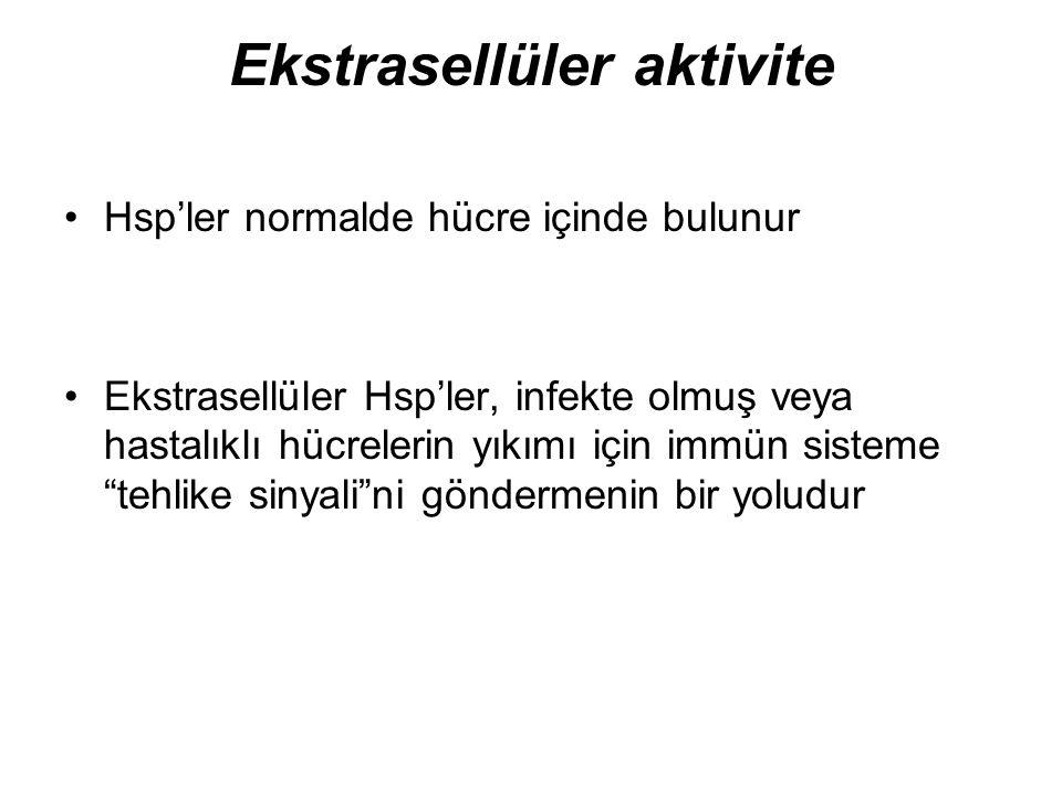 Ekstrasellüler aktivite Hsp'ler normalde hücre içinde bulunur Ekstrasellüler Hsp'ler, infekte olmuş veya hastalıklı hücrelerin yıkımı için immün siste