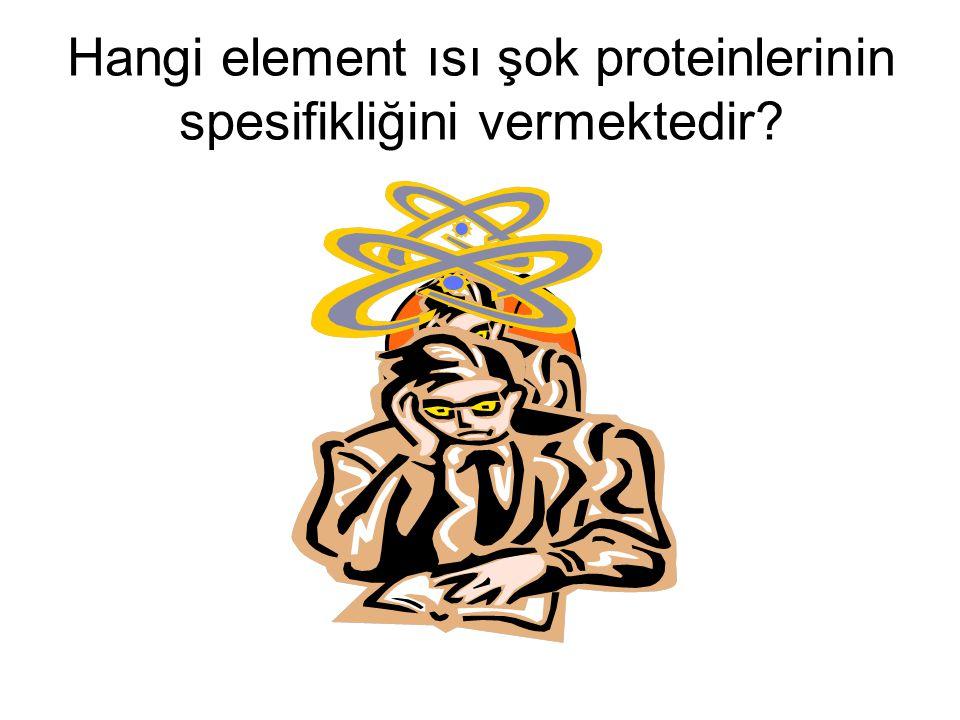 Hangi element ısı şok proteinlerinin spesifikliğini vermektedir?