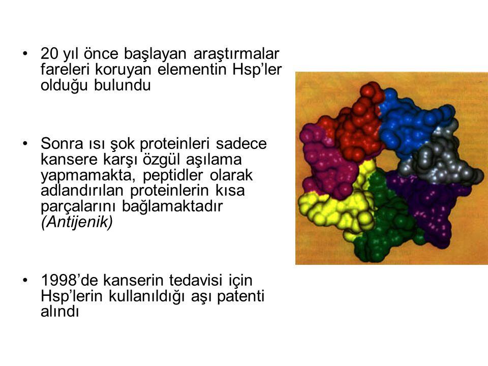 20 yıl önce başlayan araştırmalar fareleri koruyan elementin Hsp'ler olduğu bulundu Sonra ısı şok proteinleri sadece kansere karşı özgül aşılama yapma