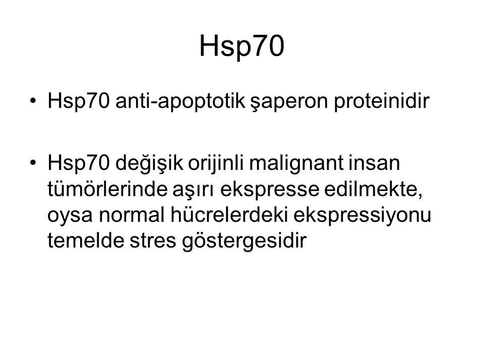 Hsp70 Hsp70 anti-apoptotik şaperon proteinidir Hsp70 değişik orijinli malignant insan tümörlerinde aşırı ekspresse edilmekte, oysa normal hücrelerdeki