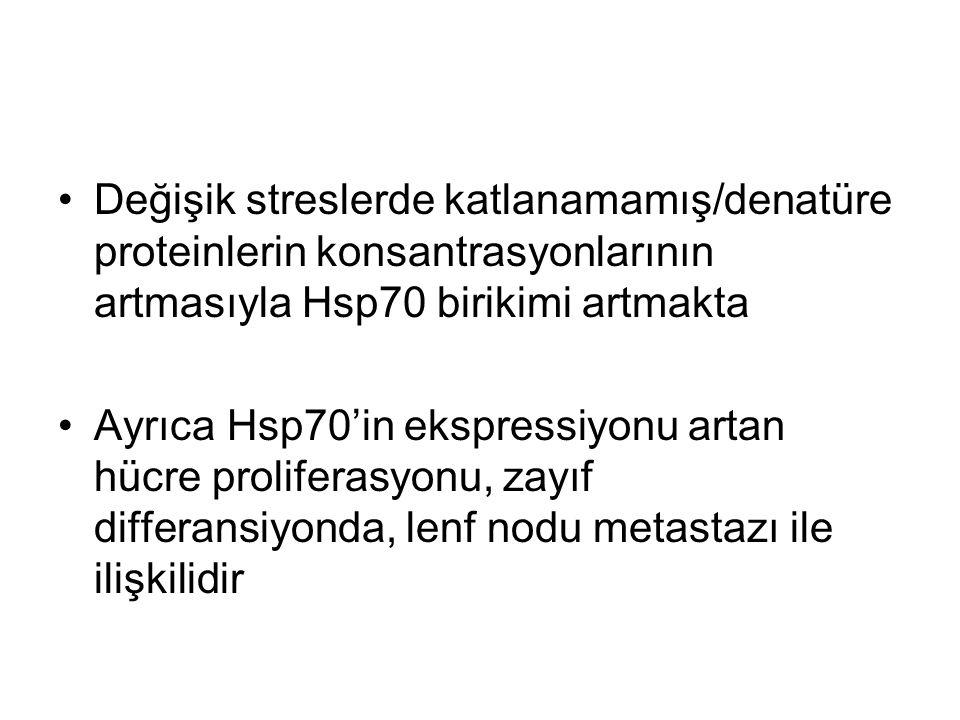 Değişik streslerde katlanamamış/denatüre proteinlerin konsantrasyonlarının artmasıyla Hsp70 birikimi artmakta Ayrıca Hsp70'in ekspressiyonu artan hücr