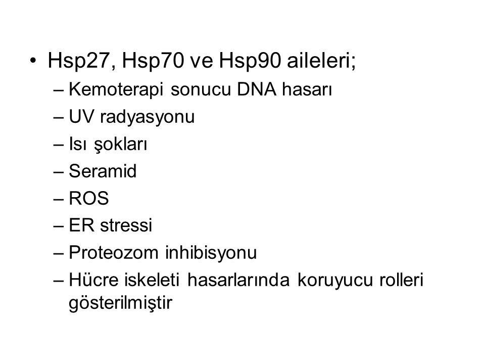 Hsp27, Hsp70 ve Hsp90 aileleri; –Kemoterapi sonucu DNA hasarı –UV radyasyonu –Isı şokları –Seramid –ROS –ER stressi –Proteozom inhibisyonu –Hücre iske