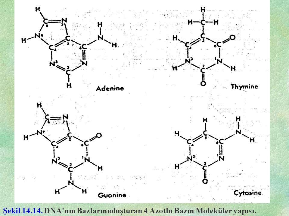 Şekil 14.14. DNA'nın Bazlarınıoluşturan 4 Azotlu Bazın Moleküler yapısı.