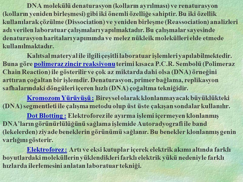 DNA molekülü denaturasyon (kolların ayrılması) ve renaturasyon (kolların yeniden birleşmesi) gibi iki önemli özelliğe sahiptir. Bu iki özellik kullanı
