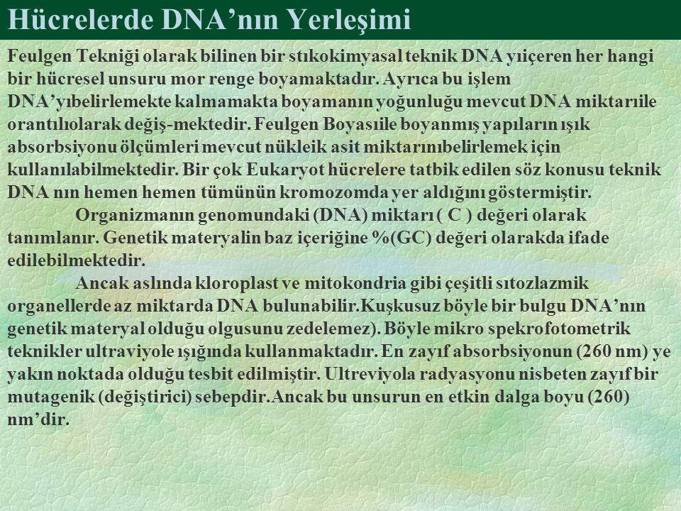 Hücrelerde DNA'nın Yerleşimi Feulgen Tekniği olarak bilinen bir stıkokimyasal teknik DNA yıiçeren her hangi bir hücresel unsuru mor renge boyamaktadır