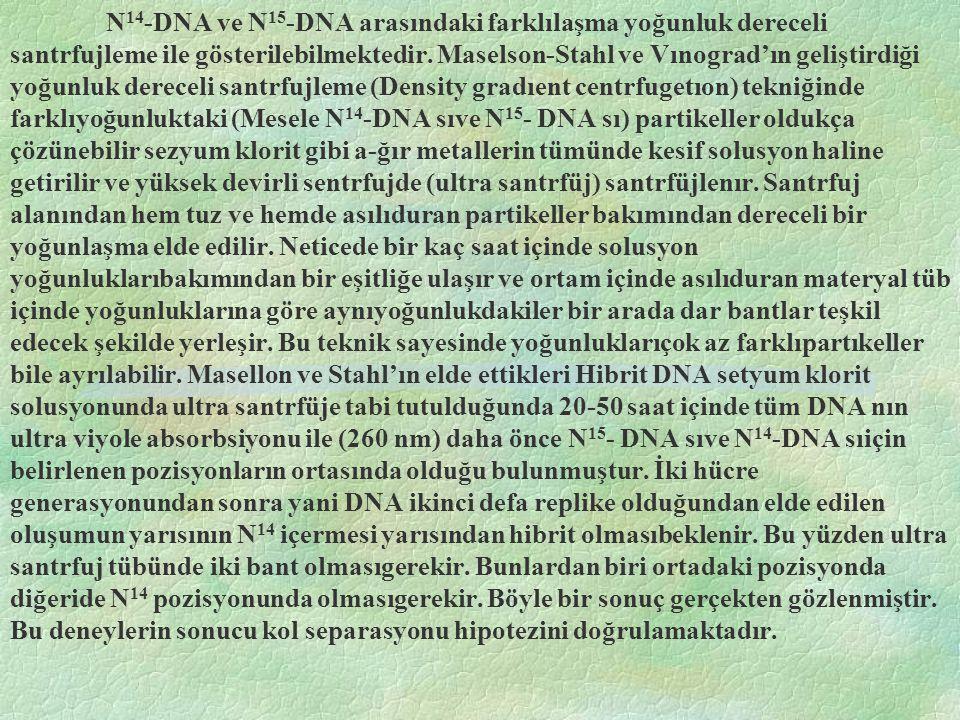 N 14 -DNA ve N 15 -DNA arasındaki farklılaşma yoğunluk dereceli santrfujleme ile gösterilebilmektedir. Maselson-Stahl ve Vınograd'ın geliştirdiği yoğu