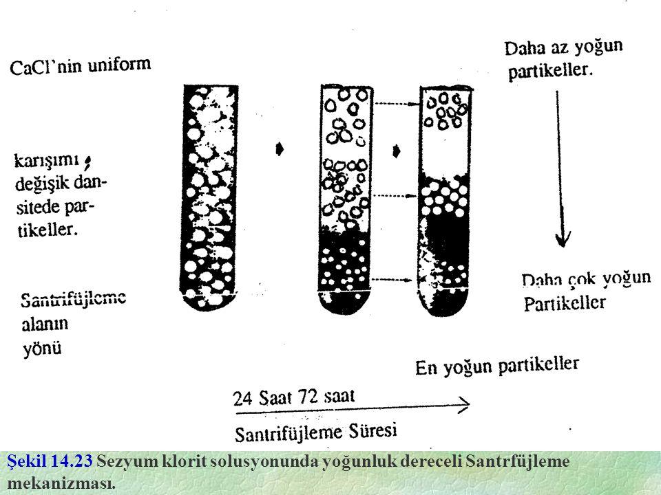 Şekil 14.23 Sezyum klorit solusyonunda yoğunluk dereceli Santrfüjleme mekanizması.