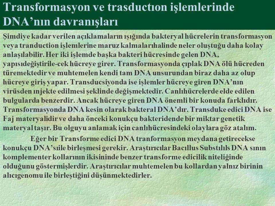 Transformasyon ve trasductıon işlemlerinde DNA'nın davranışları Şimdiye kadar verilen açıklamaların ışığında bakteryal hücrelerin transformasyon veya