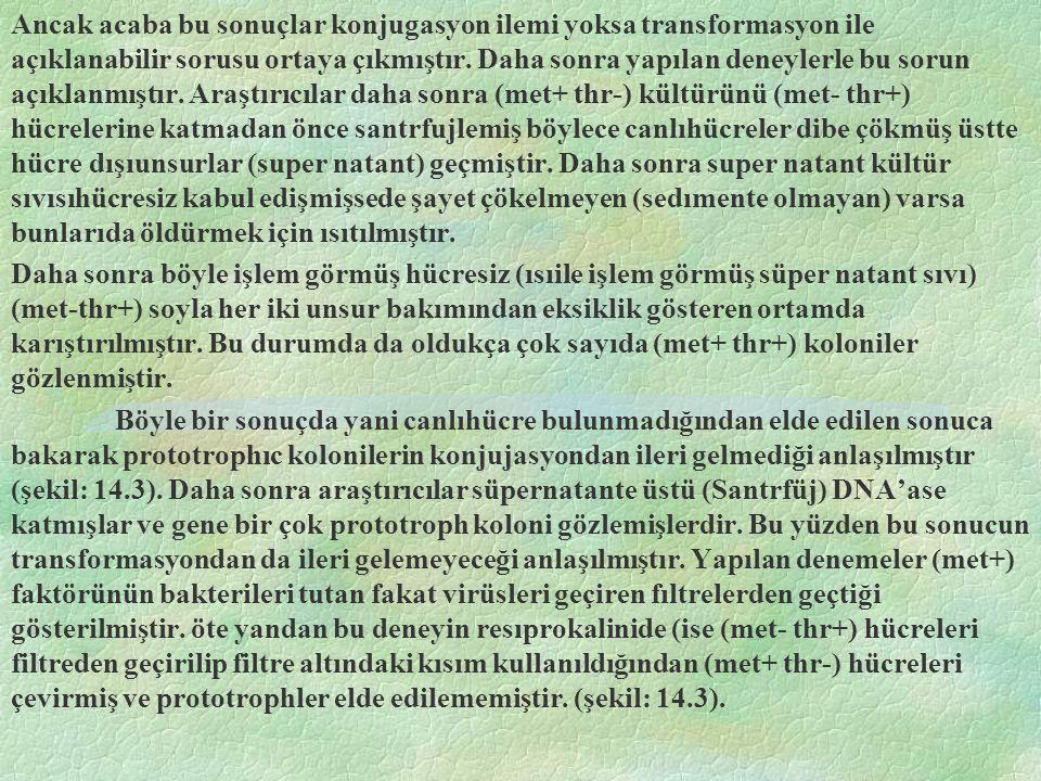 Zararsız Fajların Hayat Devresi Zararsız (temparate) fajlar ise normal olarak konukçu hücrelerini lısıze etmezler.