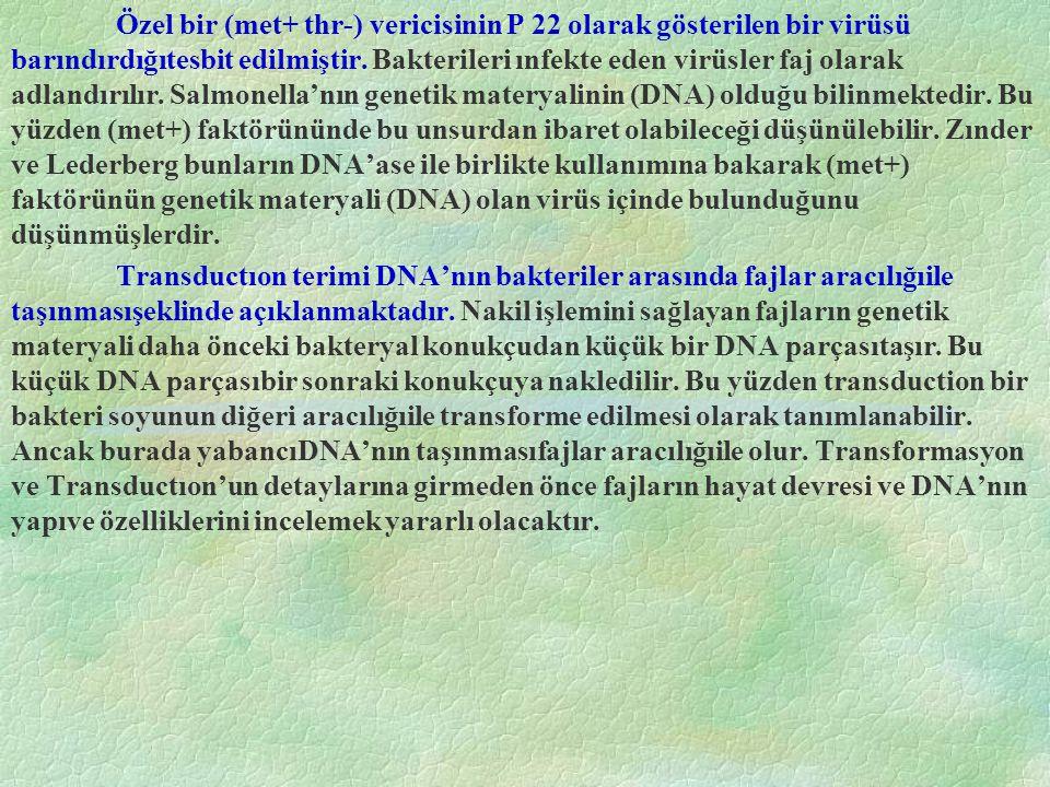 Şekil 14.16 DNA nın 4 nükleotid çiftinden oluşan kısmının moleküler modeli.