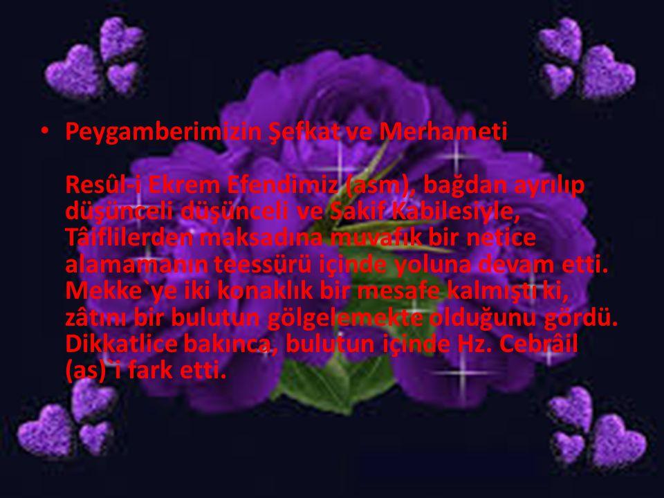 Peygamberimizin Şefkat ve Merhameti Resûl-i Ekrem Efendimiz (asm), bağdan ayrılıp düşünceli düşünceli ve Sakif Kabilesiyle, Tâiflilerden maksadına muv