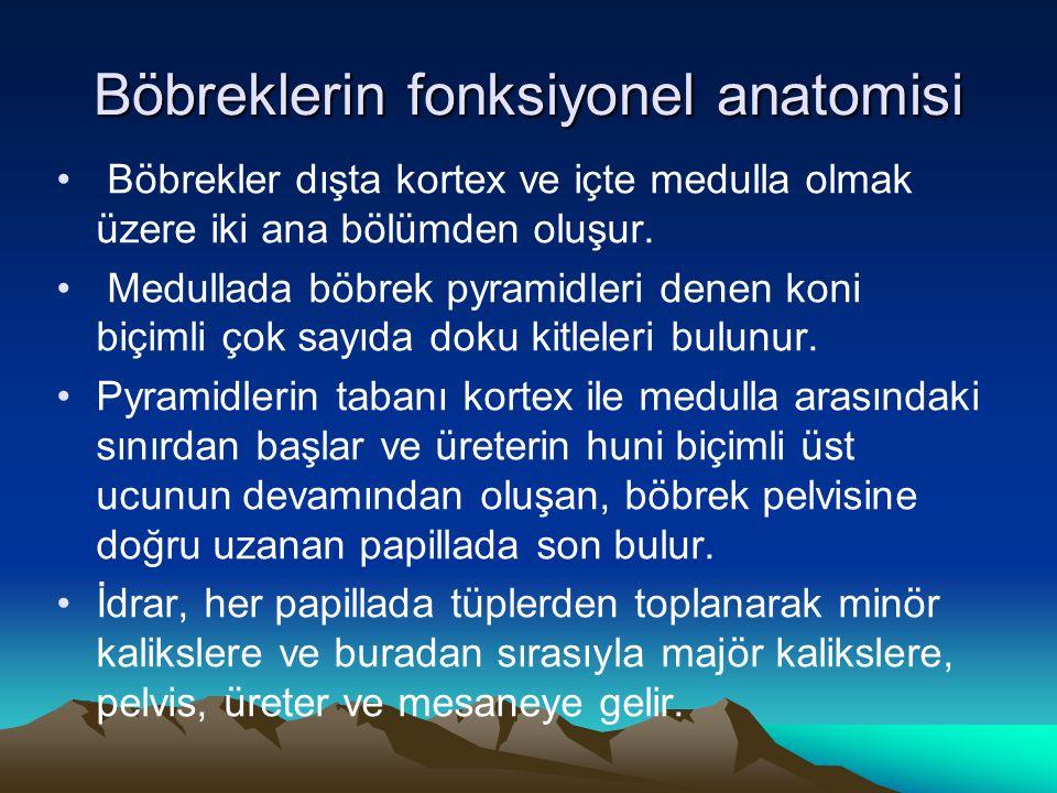 Böbreklerin fonksiyonel anatomisi Böbrekler dışta kortex ve içte medulla olmak üzere iki ana bölümden oluşur. Medullada böbrek pyramidleri denen koni