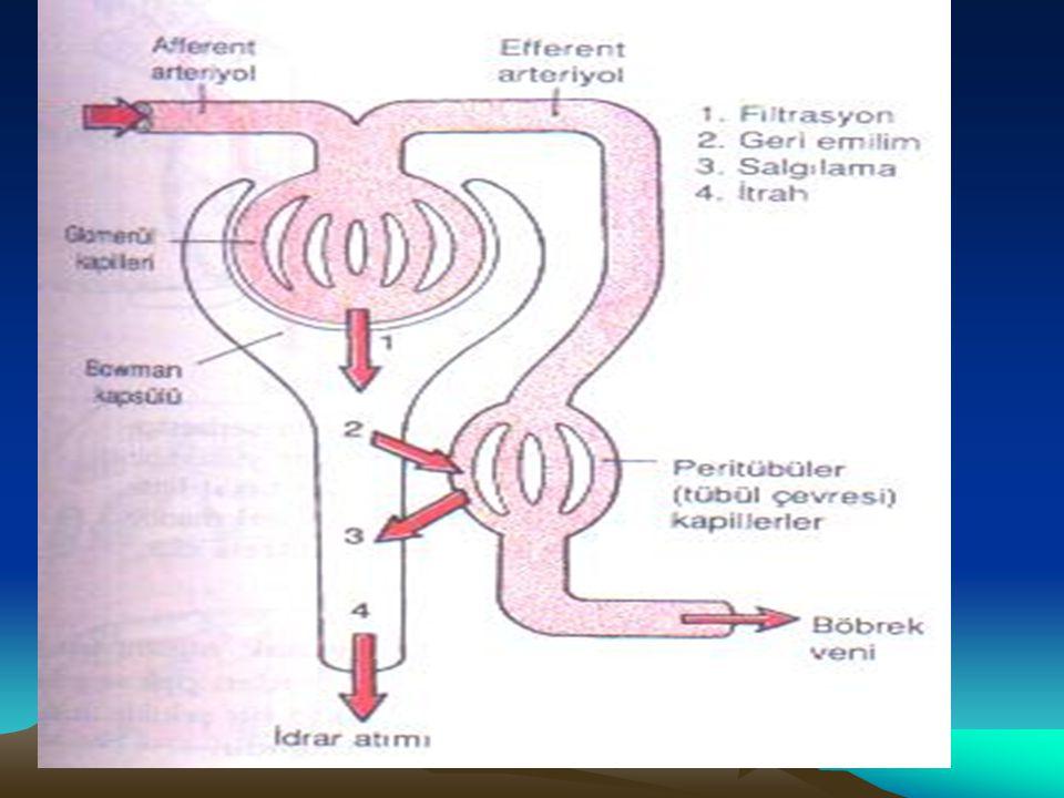 Radyonülid Renografi -DTPA : Böbrek perfüzyonu, GFR, obstrüksiyon hakkında bilgi verir.