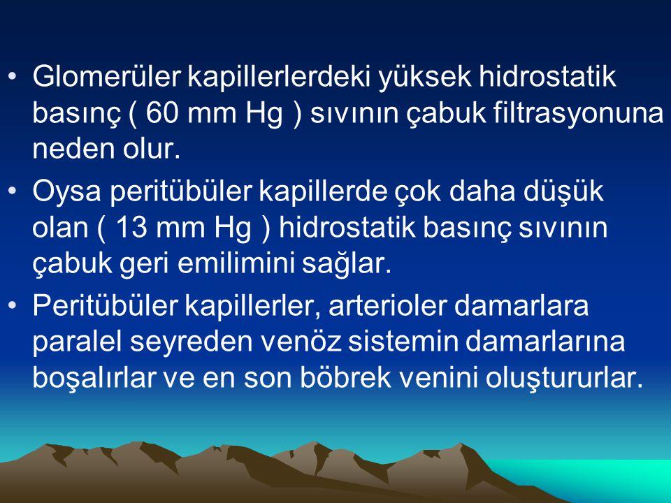Glomerüler kapillerlerdeki yüksek hidrostatik basınç ( 60 mm Hg ) sıvının çabuk filtrasyonuna neden olur. Oysa peritübüler kapillerde çok daha düşük o