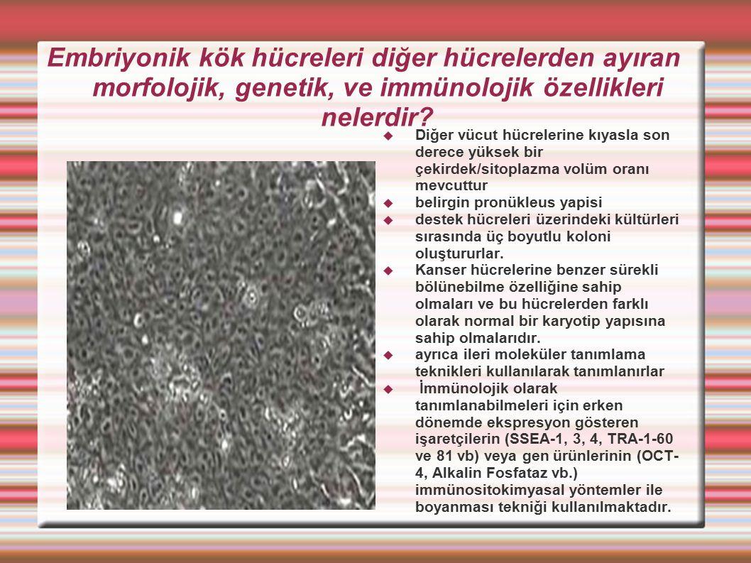 Embriyonik kök hücreleri diğer hücrelerden ayıran morfolojik, genetik, ve immünolojik özellikleri nelerdir?  Diğer vücut hücrelerine kıyasla son dere