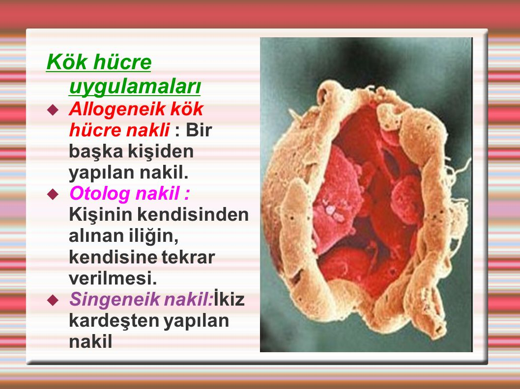 Kök hücre uygulamaları  Allogeneik kök hücre nakli : Bir başka kişiden yapılan nakil.  Otolog nakil : Kişinin kendisinden alınan iliğin, kendisine t