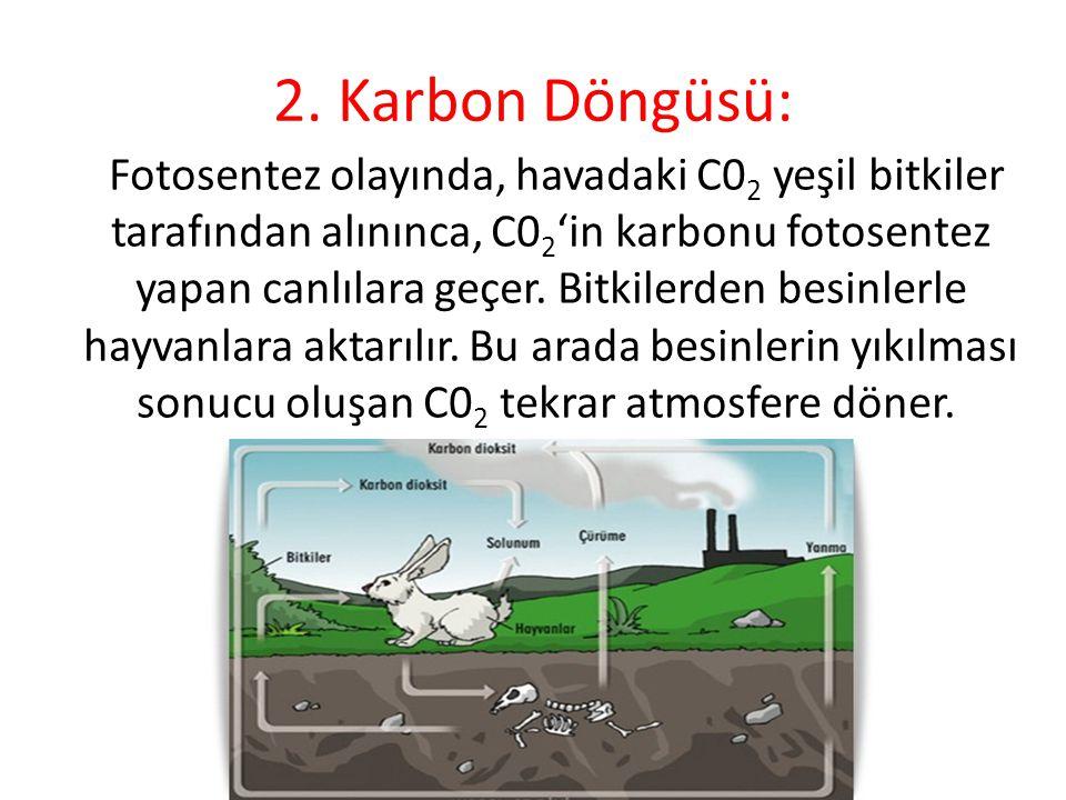 2. Karbon Döngüsü: Fotosentez olayında, havadaki C0 2 yeşil bitkiler tarafından alınınca, C0 2 'in karbonu fotosentez yapan canlılara geçer. Bitkile