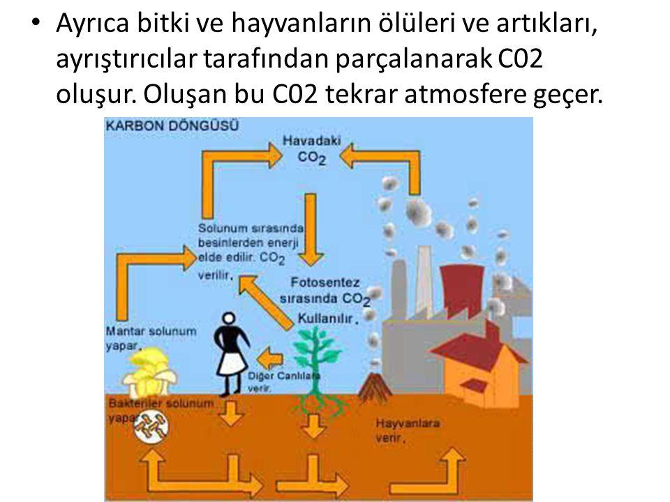 Ayrıca bitki ve hayvanların ölüleri ve artıkları, ayrıştırıcılar tarafından parçalanarak C02 oluşur. Oluşan bu C02 tekrar atmosfere geçer.
