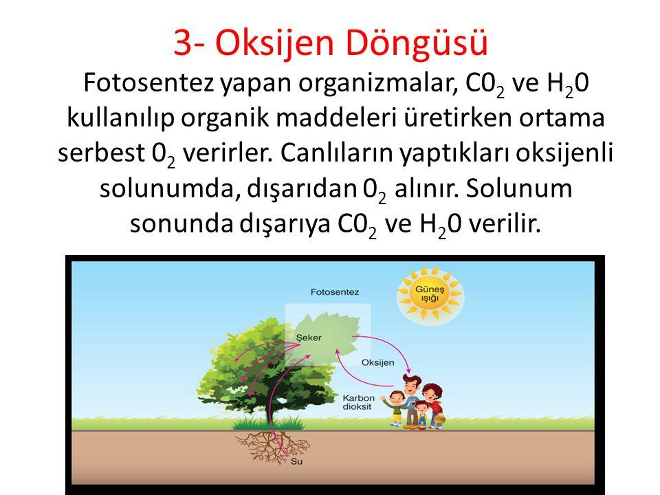3- Oksijen Döngüsü Fotosentez yapan organizmalar, C0 2 ve H 2 0 kullanılıp organik maddeleri üretirken ortama serbest 0 2 verirler. Canlıların yaptıkl