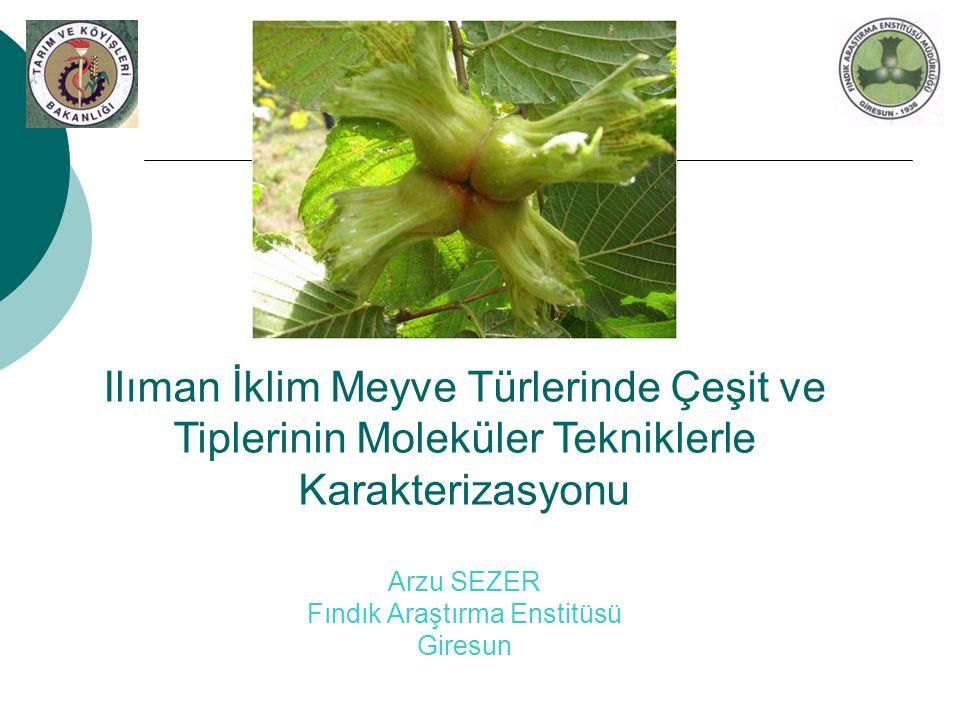 Ilıman İklim Meyve Türlerinde Çeşit ve Tiplerinin Moleküler Tekniklerle Karakterizasyonu Arzu SEZER Fındık Araştırma Enstitüsü Giresun