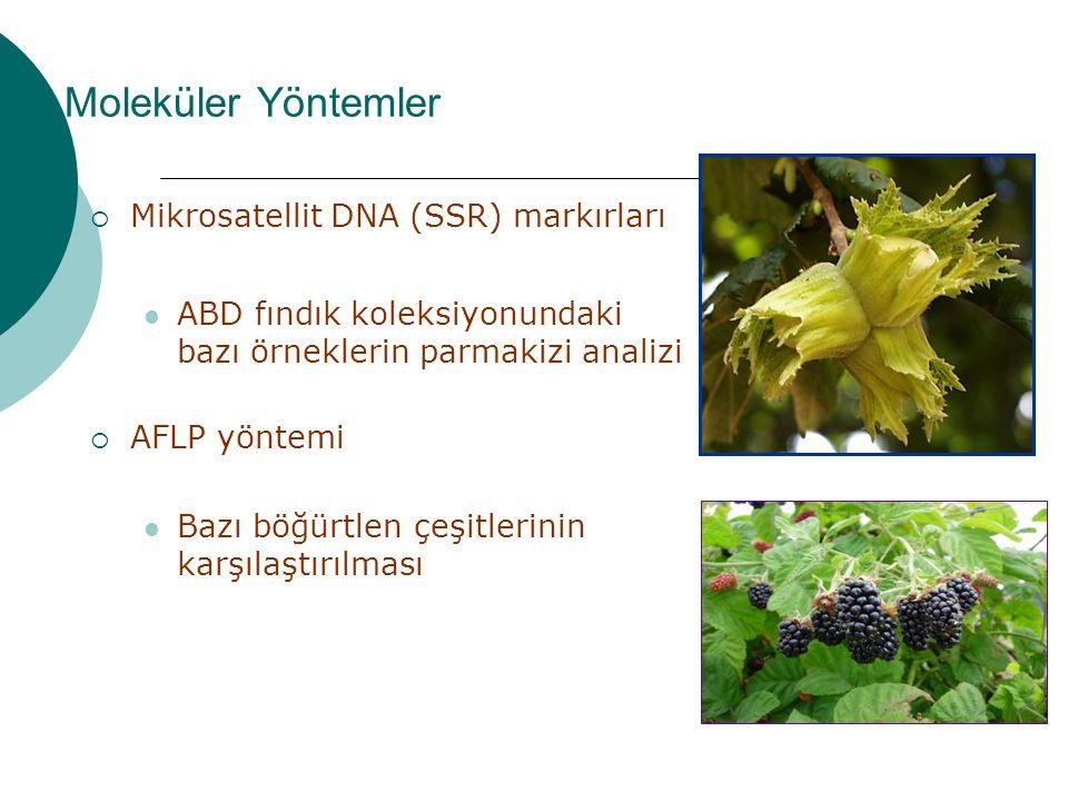 Moleküler Yöntemler  Mikrosatellit DNA (SSR) markırları ABD fındık koleksiyonundaki bazı örneklerin parmakizi analizi  AFLP yöntemi Bazı böğürtlen ç