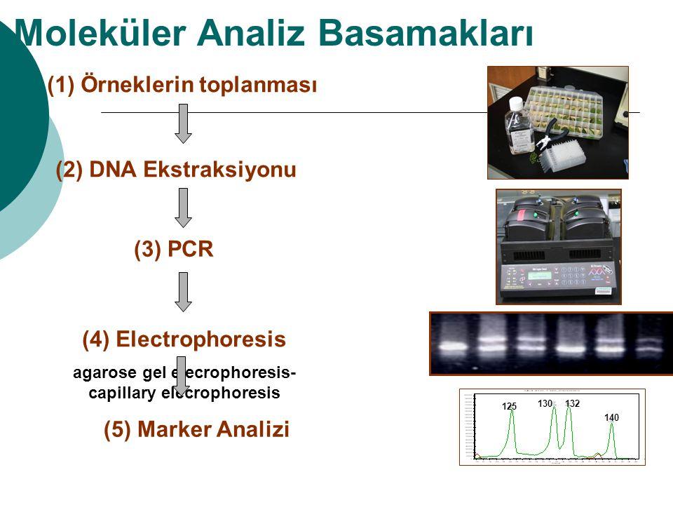 (1) Örneklerin toplanması (2) DNA Ekstraksiyonu (3) PCR (4) Electrophoresis agarose gel elecrophoresis- capillary elecrophoresis (5) Marker Analizi Mo