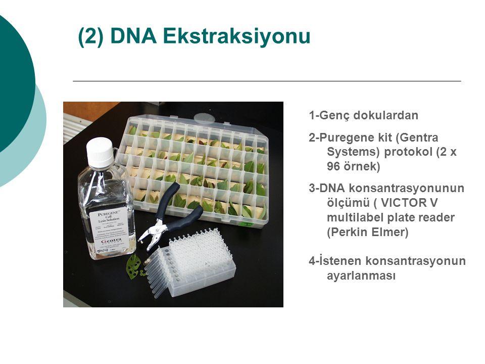 (2) DNA Ekstraksiyonu 1-Genç dokulardan 2-Puregene kit (Gentra Systems) protokol (2 x 96 örnek) 3-DNA konsantrasyonunun ölçümü ( VICTOR V multilabel p