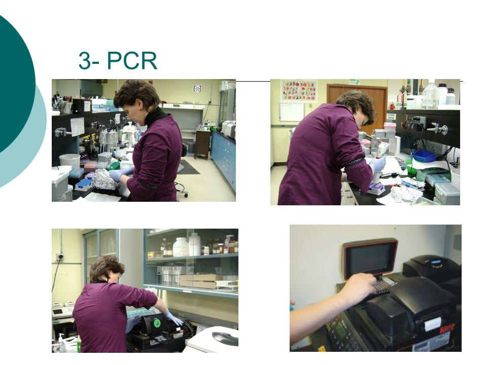 3- PCR